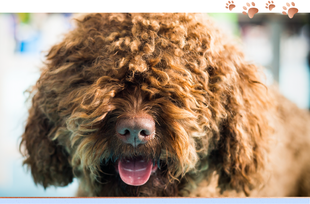 photo of barbet with tongue sticking out